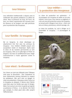 """Informations sur les """"Patous"""" (chiens gardant les troupeaux) 3/3"""