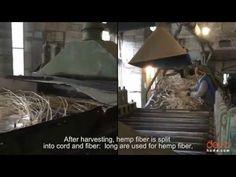 1. Выращивание и обработка конопляного волокна | Devohome