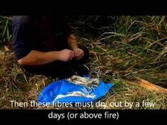 Dzikie rośliny jadalne - cz3 Mąka z pałki (Wild edible plants - pt3 Reed...
