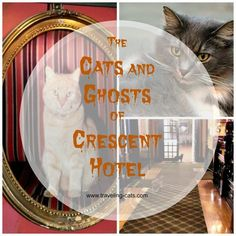 Very spooky Halloween special: the ghosts and cats of the most haunted hotel in the US - http://www.traveling-cats.com/2015/10/cats-from-eureka-springs-usa.html  ghostly cats, Arkansas, Eureka Springs, 1186 Crescent Hotel