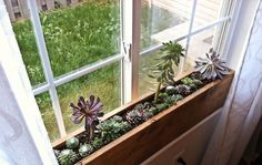 DIY Idea: Make a 10 Minute Succulent Windowsill Box. Description from pinterest.com. I searched for this on bing.com/images