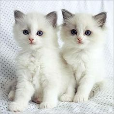 .Double cutness!!