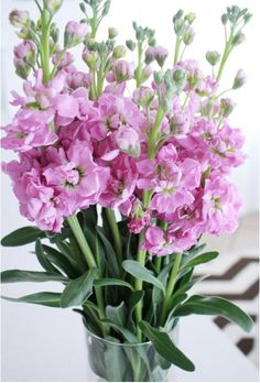i truly adore this fragrant flower....stocks...old fashioned, and delicious!!!
