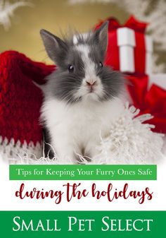 Tips For Keeping Them Safe. Guinea Pig Toys, Guinea Pig Care, Guinea Pigs, House Rabbit Society, Homemade Dog Treats, Chinchillas, Hamsters, Reptile Cage, Reptile Enclosure