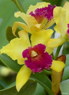 Le pays des orchidées...