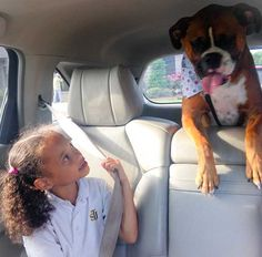 Boxer and his girl on the way to school.