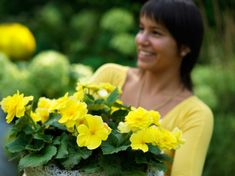 Tuberous begonias are colorful, shade loving plants that love warm weather. Start the tubers indoors this winter so you can enjoy months of flowers. Tuberous Begonia, Flower Boxes, Flowers, Warm Weather, Gardens, Herbs, Yellow, Plants, Window Boxes
