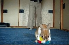 This bunny who is capable of a flawless forward flip, WHILE HOLDING A BALL. | The 33 Most Important Bunny GIFs On The Internet