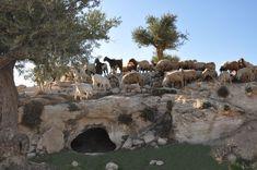 Image detail for -... To The Holy Land - Shepherds' Field, Bethlehem | Where Jesus Walked