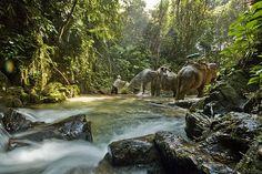 Thai Rainforest, Khao Sok National Park