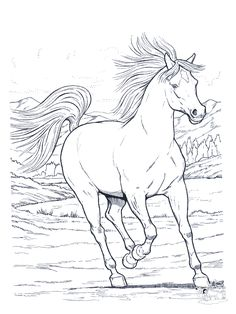 Wild Horse Coloring Pages | Wild Horse Animal Coloring Page or ...