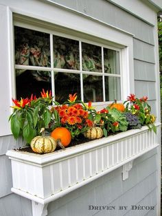 Fall Window Boxes with peppers, mums, mini pumpkins, and gourds