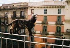 Equilibrium #cat