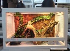 An adult bearded dragon needs at least a tank to live in Bearded Dragon Enclosure, Bearded Dragon Cage, Window Ventilation, Large Terrarium, Glass Cages, Baby Dragon, Pet Shop, Habitats, Things To Come