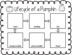 Worksheets Life Cycle Of A Pumpkin Worksheet life cycle of a pumpkin mini booklet free printable decodable lifecycle pumpkin