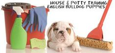 How to house train a English bulldog the right way - https://www.castlewoodbulldogs.com/house-training-english-bulldog-puppies/