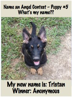 Here's the Name an Angel Winner #5! Tristan!!! My #t1sweetbot Trystan wants to raise his own $ to get his own service dog, awesome! <3