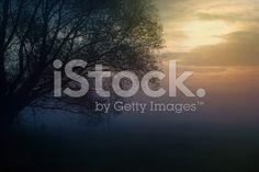 Podświetlany Drzewo rano Mgła na łące na wschód słońca – zdjęcie typu royalty-free