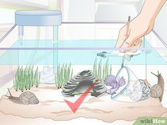 """How to Take Care of a Betta Fish. Bettas, also known as """"Siamese fighting fish"""", are popular pets recognized for their aggressiveness, interactivity, and low cost for care and maintenance. Betta fish can prove to be your best friend for. Colorful Fish, Tropical Fish, Freshwater Aquarium, Aquarium Fish, Beta Fish Care, Betta Fish Toys, Cheap Pets, Siamese Fighting Fish, African Cichlids"""