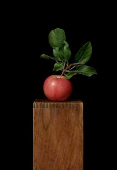 """Sydney Bella Sparrow, """"Ode to the Gala Apple"""" - 16x11, oil on canvas on panel"""