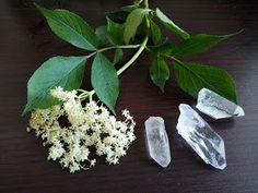 Herbs, Plants, Paleo, Magick, Herb, Beach Wrap, Plant, Planets, Paleo Food