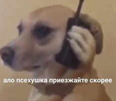 Memes Funny Faces, Stupid Memes, Stupid Pictures, Hello Memes, Happy Memes, Russian Memes, Avakin Life, Cute Love Memes, Mood Pics