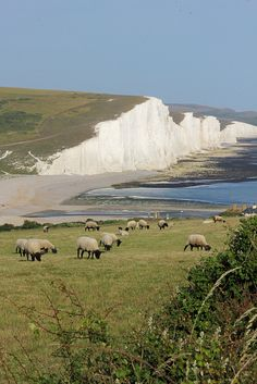 Seven Sisters, South Downs National Park, Sussex, England. So is all of England made out of that white stuff?