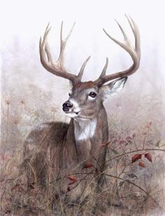 Deer in art many prints here! Whitetailed Deer and other wildlife art by Larry K. Wildlife Paintings, Wildlife Art, Animal Paintings, Animal Drawings, Art Drawings, Deer Paintings, Horse Drawings, Deer Photos, Deer Pictures