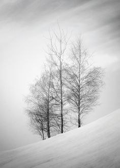 Birches by Lucia Blaskova on 500px