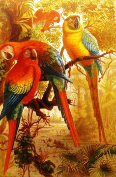 antique print brehms tierleben arara 1892 now on etsy € Tropical Birds, Exotic Birds, Colorful Birds, Yellow Birds, Frida Art, Bird Illustration, Illustrations, Parrot Bird, Antique Prints