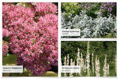 """Gemeinsam mit dem Magazin """"Lust auf Natur"""" haben wir dieses Beet entwickelt: Terrassenflächen schön zu umpflanzen ist manchmal gar nicht so… Clematis, Wisteria Sinensis, Plants, Red, Patio, Astrantia, Climbing Roses, Climbing Vines, Plant"""