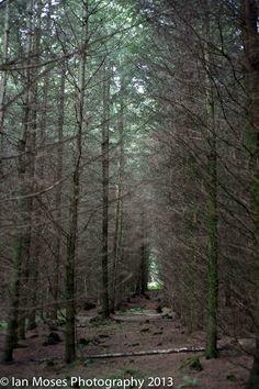Woodland Lights