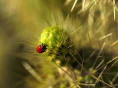 stuck lady bug