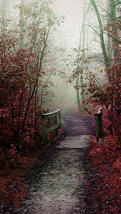 Autumn Mist Path