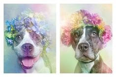 "Pitbulls often get a bad rap when it comes to public perception. New York City-based photographer Sophie Gamand is hoping to change that with her photo series, ""Flower Power, Pit Bulls of the Revolution""."