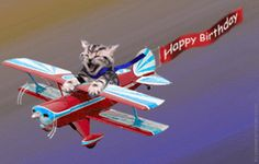 kitten plane avion chaton happy birthday Image, animated GIF
