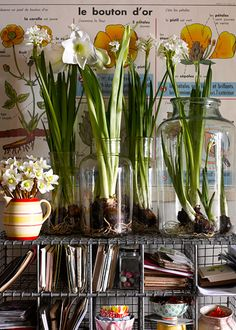 Good idea for Autumn, plant the bulbs in jars.