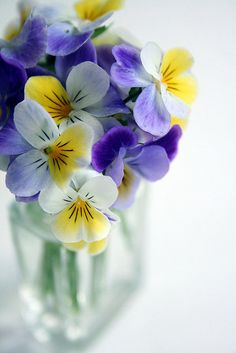 Johnny Jump Up, very pretty flowers! Flower Power, My Flower, Ikebana, Pretty Flowers, Fresh Flowers, Fleur Pansy, Flower Seeds, Pansies, Floral Arrangements