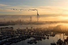 Portsmouth Spinnaker Tower  with Geese ~ the shot taken from Gosport