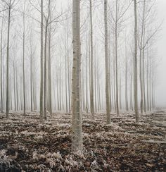 """beeslikehoney: """"stories made of mist by manyfires http://flic.kr/p/qt5QvX """""""