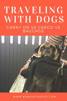 We break down the difference between traveling with your pet on a plane in the cabin, in cargo, and in baggage so you know which option works for you.