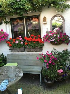 Best tips for how to care geraniums in winter to stay beautiful Geraniums in winter need special care because these flowers come in rest until next spring. Geraniums are spectacular flowers that bl… Container Gardening Vegetables, Succulents In Containers, Container Flowers, Container Plants, Vegetable Gardening, Window Planters, Fall Planters, Flower Planters, Window Boxes