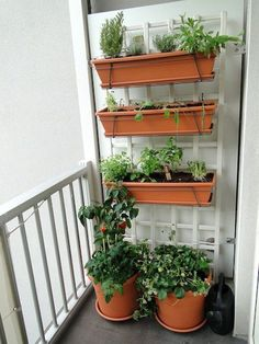 A balcony vertical garden with plastic terra cotta trough planters attached to a. - A balcony vertical garden with plastic terra cotta trough planters attached to a white lattice Garden Garden apartment Garden ideas Garden small Source by -