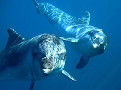 Impressive to meet them underwater...