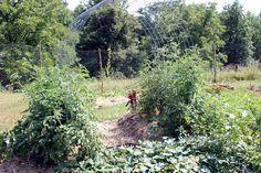 Homestead Honey   Garden Vertically with Trellises   http://homestead-honey.com
