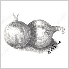 Onions still life study pencil drawing art original artwork realism painting drawing kitchen wall art food healthy eating diet fresh vegetables fruit home decor