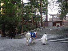 神宮にて。天候や神馬の体調によりますが、神馬の見参は毎月一日・十一日・二十一日、内宮八時・外宮八時半頃行われます。
