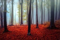 Autumn Forest Mood - Creative Art - A moody forest in all it's beauty in Autumn. A dream.  Thanks to everyone for your comments and likes. All are very much appreciated.