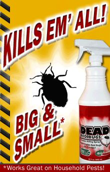 QA: What are bed bugs? How do you know if you have them?? How do you get rid of them? - Dead Bed Bug Blog