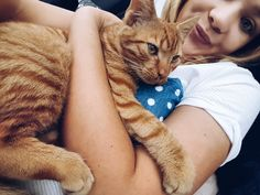 Stefa #gingercat#kitty#